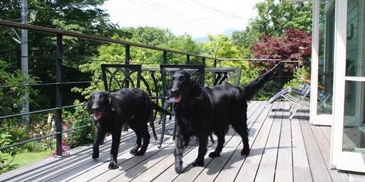 伊豆の別荘地でペットと暮らす